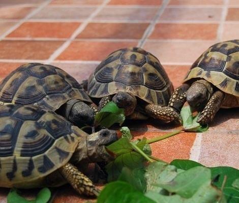 养龟有什么需要注意的?